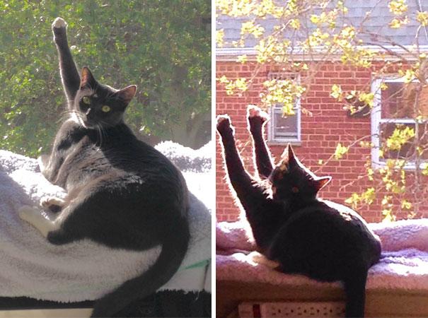 Γάτες που λατρεύουν τον ήλιο (18)