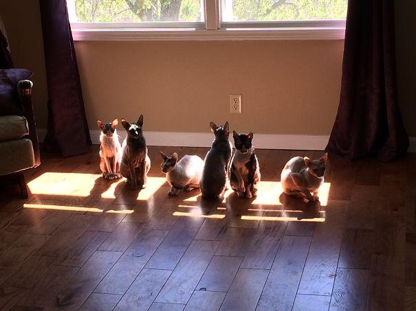 Γάτες που λατρεύουν τον ήλιο (19)