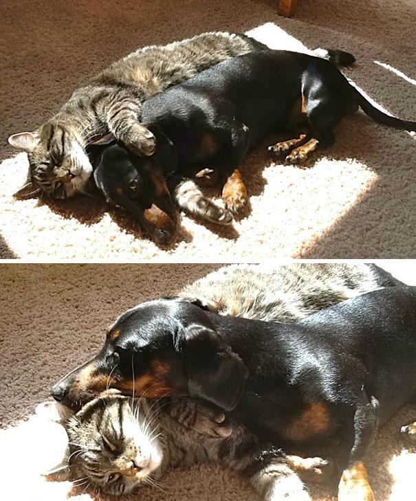 Γάτες που λατρεύουν τον ήλιο (20)