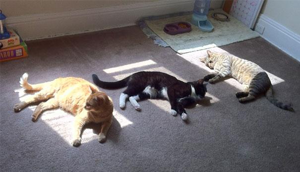 Γάτες που λατρεύουν τον ήλιο (21)