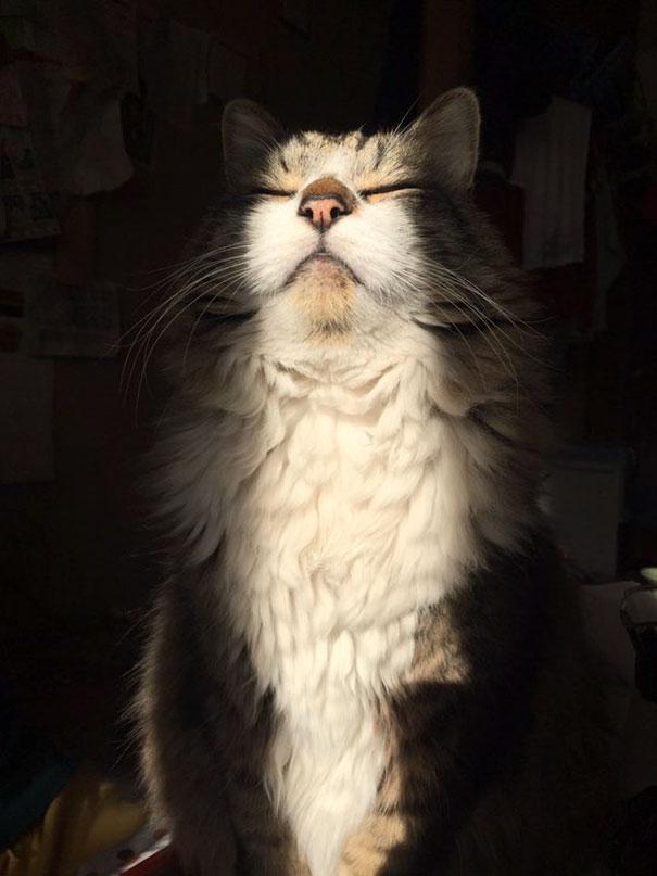 Γάτες που λατρεύουν τον ήλιο (23)