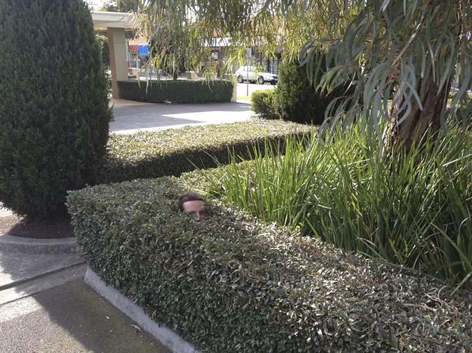Κηπουρός έγινε viral (1)