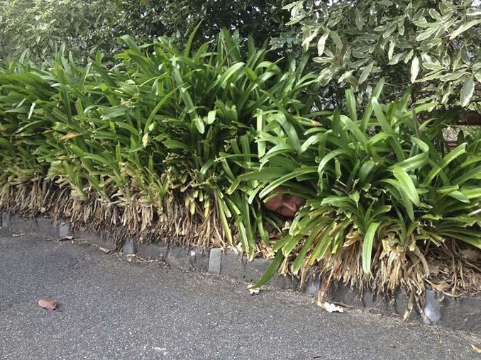 Κηπουρός έγινε viral (3)