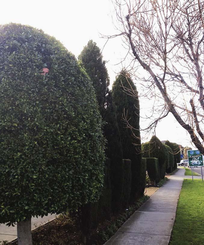 Κηπουρός έγινε viral (4)