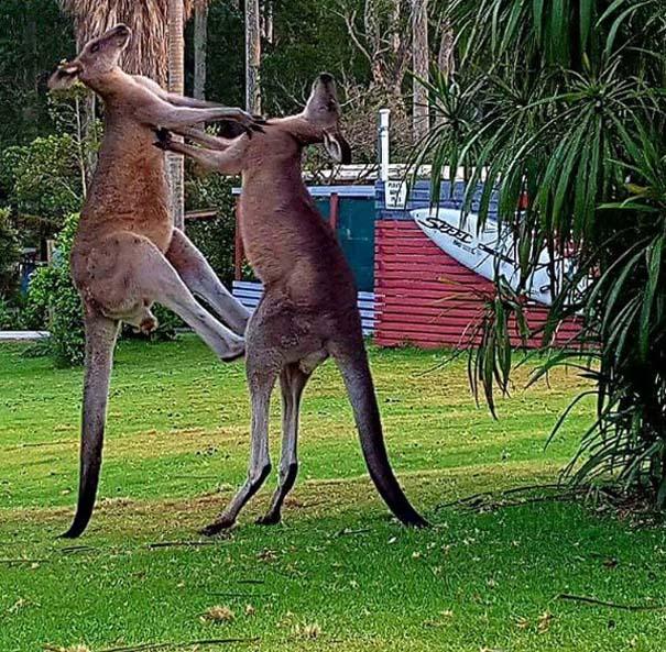 Μόνο στην Αυστραλία #23 (7)
