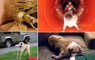 25 σκύλοι που έχουν περάσει και καλύτερες στιγμές