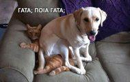 Σκύλοι που τεστάρουν την υπομονή των γατών (1)