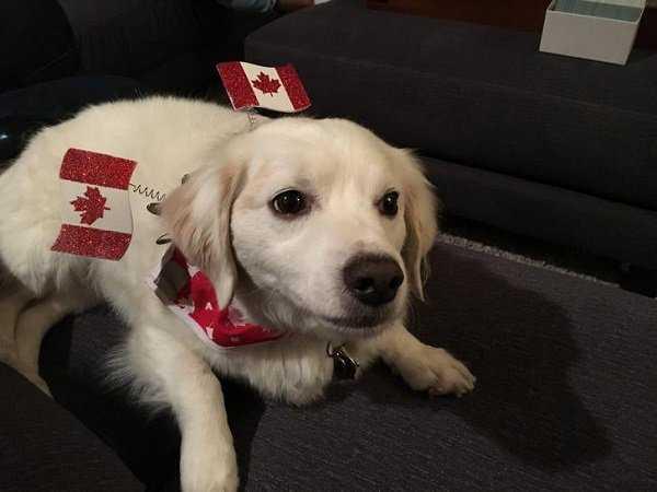 Εν τω μεταξύ, στον Καναδά... #28 (8)