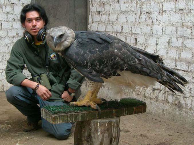 Ένα από τα μεγαλύτερα πτηνά στον κόσμο (1)