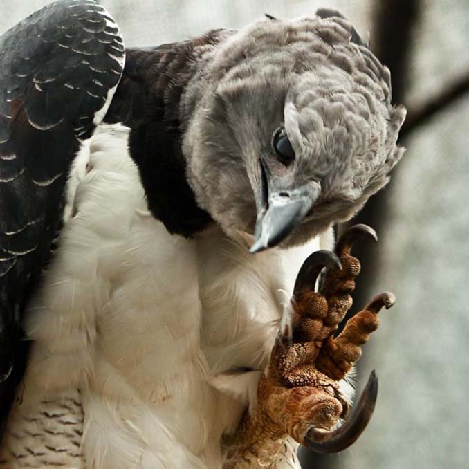 Ένα από τα μεγαλύτερα πτηνά στον κόσμο (2)