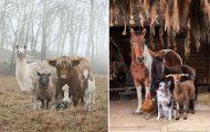 Φωτογραφίζοντας τα ζώα της φάρμας έτσι όπως δεν τα έχετε ξαναδεί