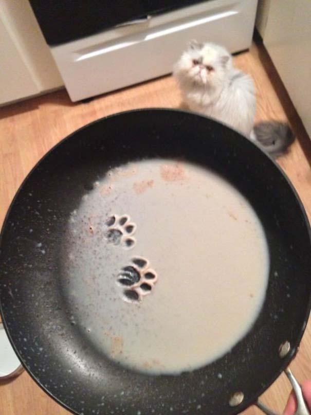 Γάτες που... κάνουν τα δικά τους! #55 (1)