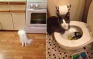 Γάτες που... κάνουν τα δικά τους! #57 (11)