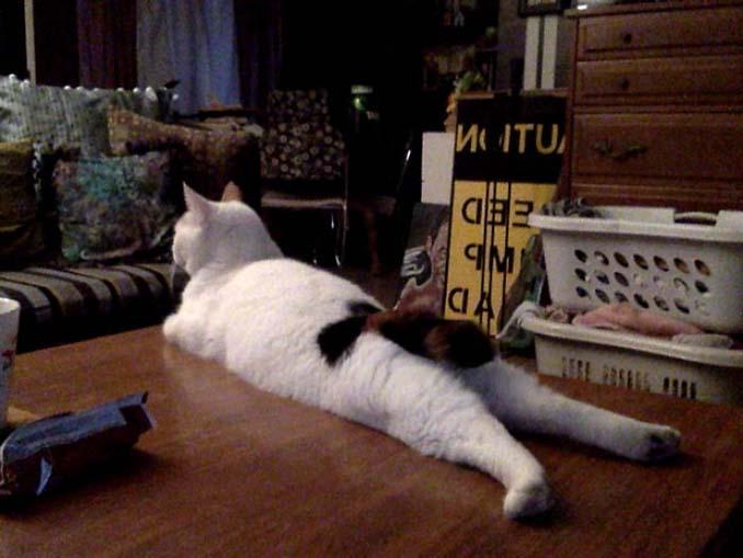 Γάτες που... κάνουν τα δικά τους! #55 (3)