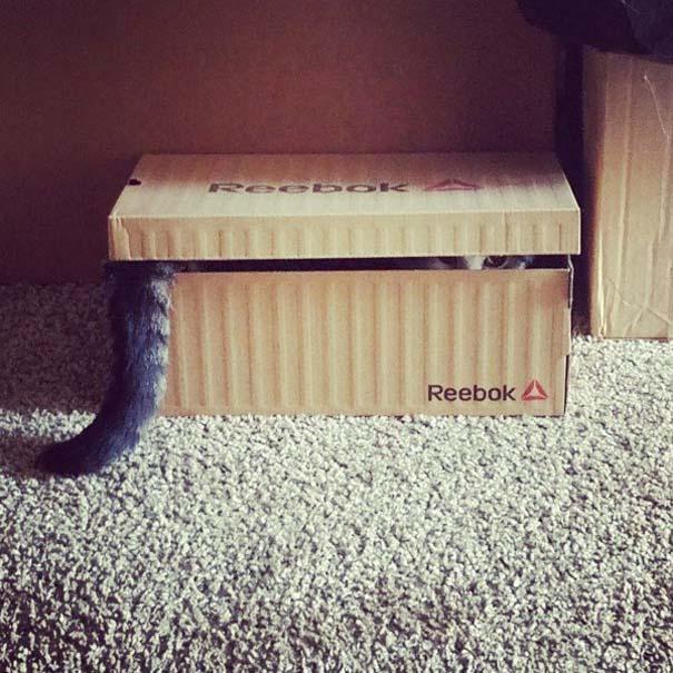 Γάτες που... κάνουν τα δικά τους! #56 (2)