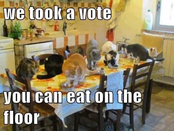 Γάτες που... κάνουν τα δικά τους! #55 (4)