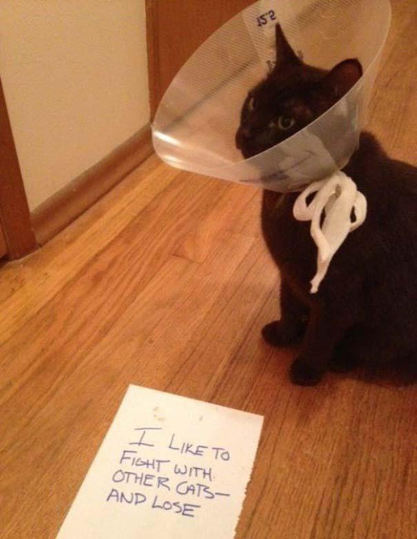 Γάτες που... κάνουν τα δικά τους! #55 (5)