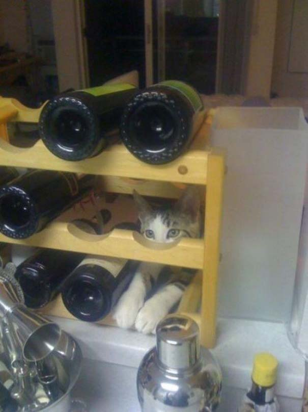Γάτες που... κάνουν τα δικά τους! #55 (6)