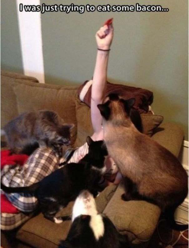 Γάτες που... κάνουν τα δικά τους! #56 (4)