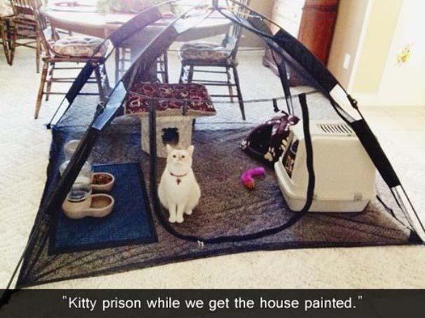 Γάτες που... κάνουν τα δικά τους! #55 (7)