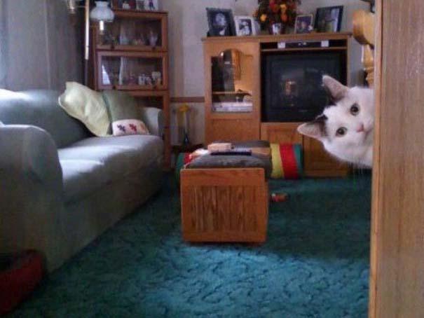 Γάτες που... κάνουν τα δικά τους! #55 (8)