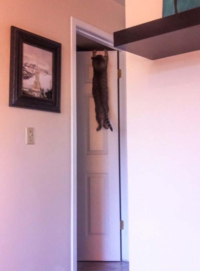 Γάτες που... κάνουν τα δικά τους! #56 (10)