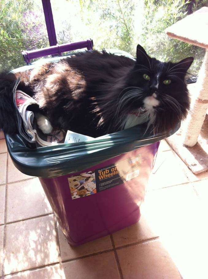 Γάτες που... κάνουν τα δικά τους! #55 (10)