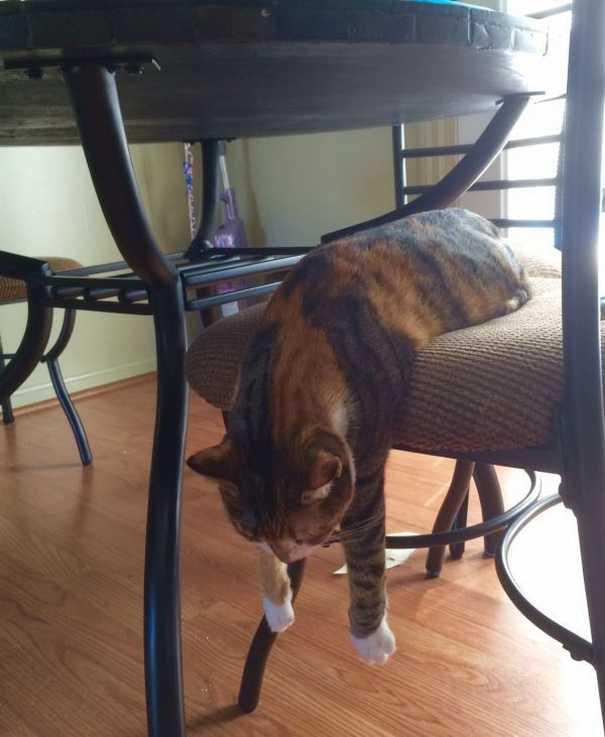 Γάτες που... κάνουν τα δικά τους! #57 (2)