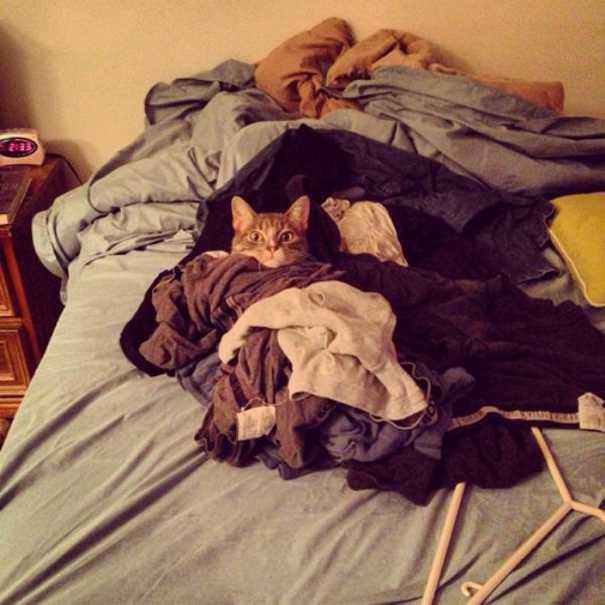 Γάτες που... κάνουν τα δικά τους! #58 (4)