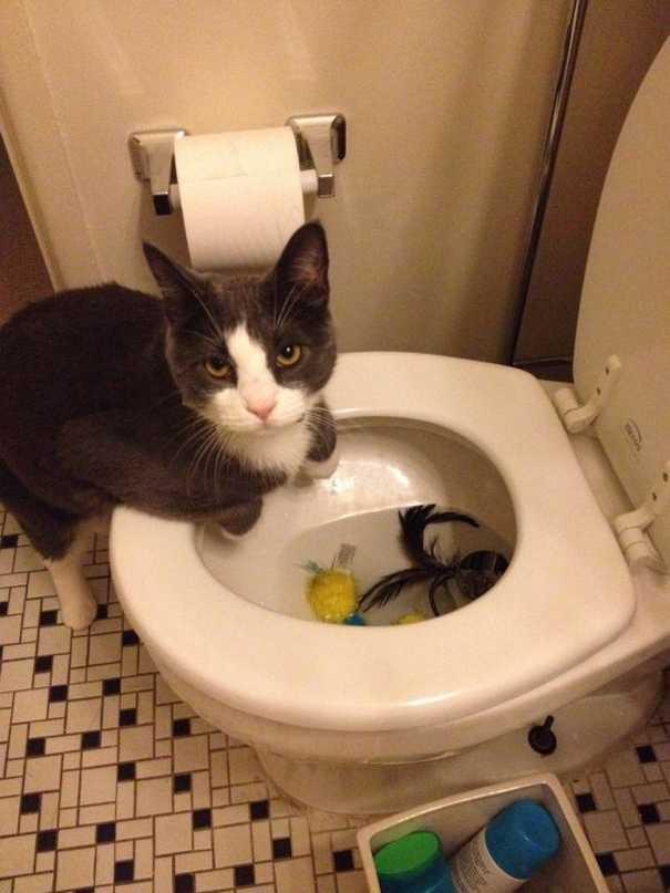 Γάτες που... κάνουν τα δικά τους! #57 (5)