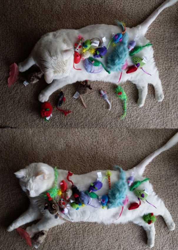 Γάτες που... κάνουν τα δικά τους! #57 (6)