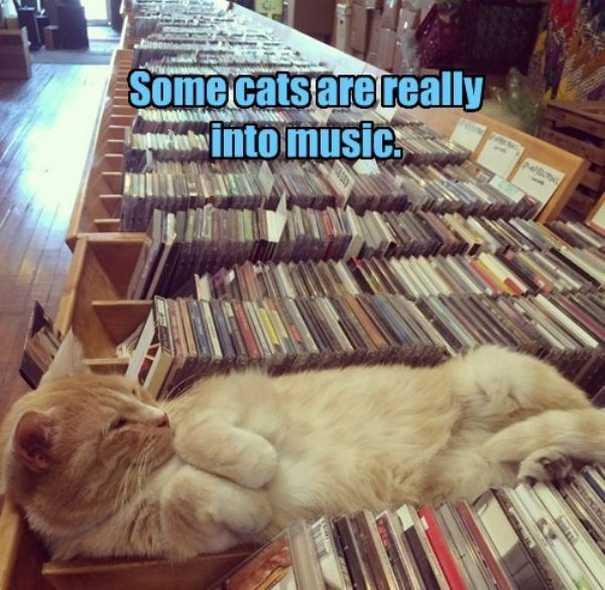 Γάτες που... κάνουν τα δικά τους! #57 (7)