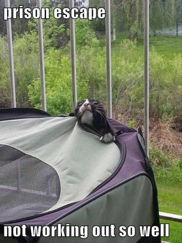 Γάτες που... κάνουν τα δικά τους! #57 (8)