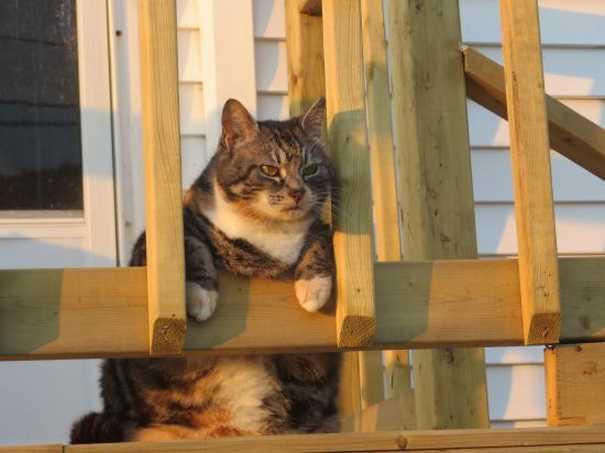 Γάτες που... κάνουν τα δικά τους! #59 (4)