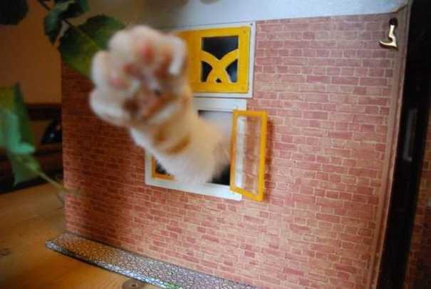 Γάτες που... κάνουν τα δικά τους! #57 (10)