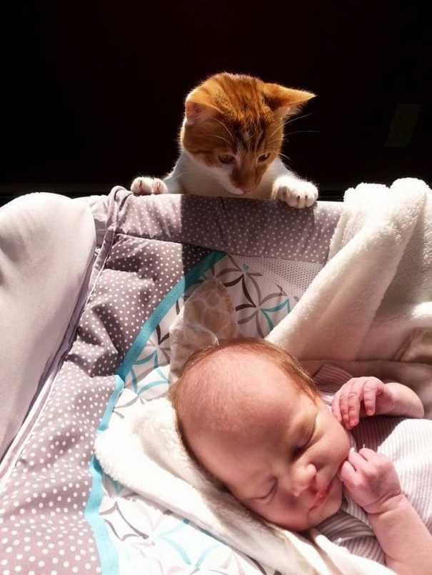 Γάτες που... κάνουν τα δικά τους! #59 (1)