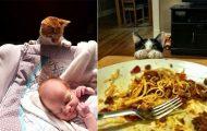 Γάτες που... κάνουν τα δικά τους! #59 (11)
