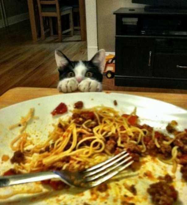 Γάτες που... κάνουν τα δικά τους! #59 (6)