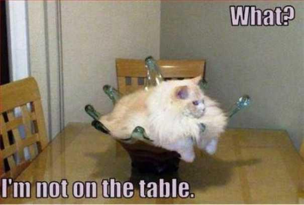Γάτες που... κάνουν τα δικά τους! #58 (7)