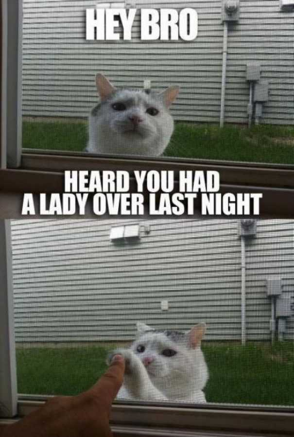 Γάτες που... κάνουν τα δικά τους! #59 (7)