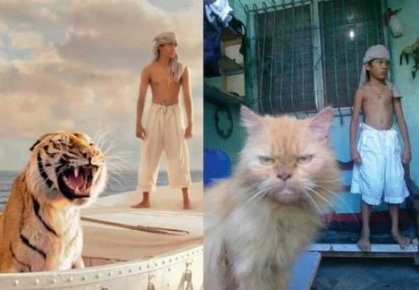 Γάτες που... κάνουν τα δικά τους! #58 (8)