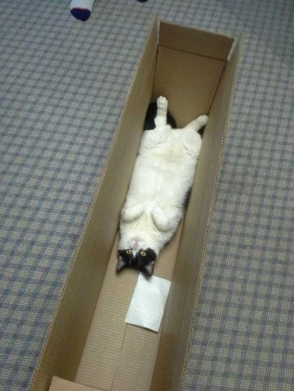 Γάτες που... κάνουν τα δικά τους! #59 (8)