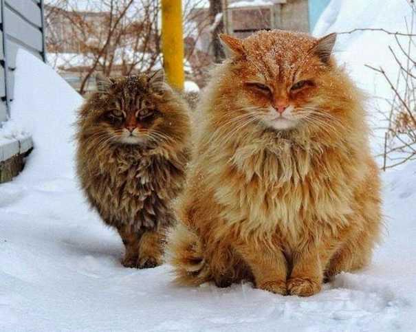 Γάτες που... κάνουν τα δικά τους! #59 (9)