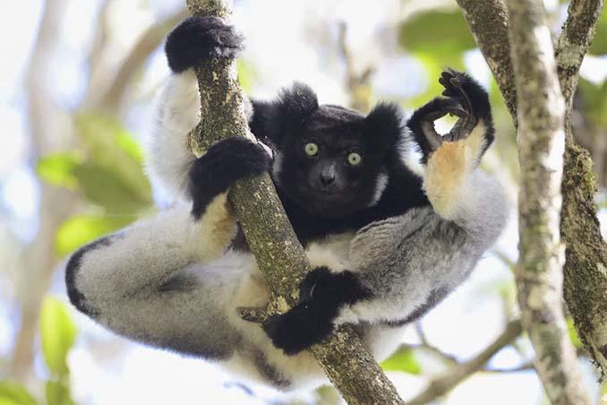 Ξεκαρδιστικές φωτογραφίες άγριας ζωής 2017 (3)