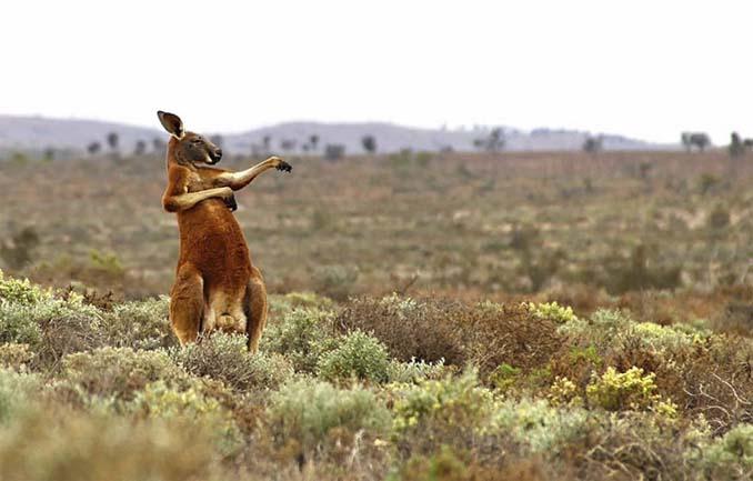 Ξεκαρδιστικές φωτογραφίες άγριας ζωής 2017 (9)