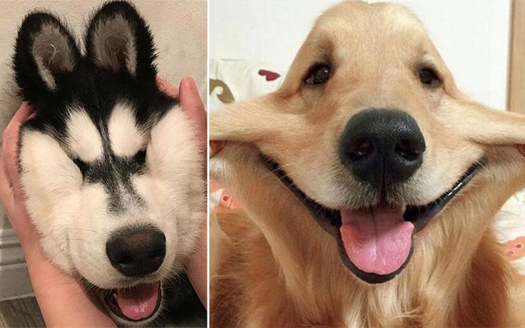 Σκύλοι με μάγουλα που είναι αδύνατον να μην ζουλήξεις (27)