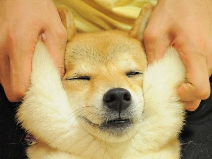 Σκύλοι με μάγουλα που είναι αδύνατον να μην ζουλήξεις (3)