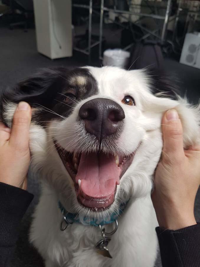 Σκύλοι με μάγουλα που είναι αδύνατον να μην ζουλήξεις (7)