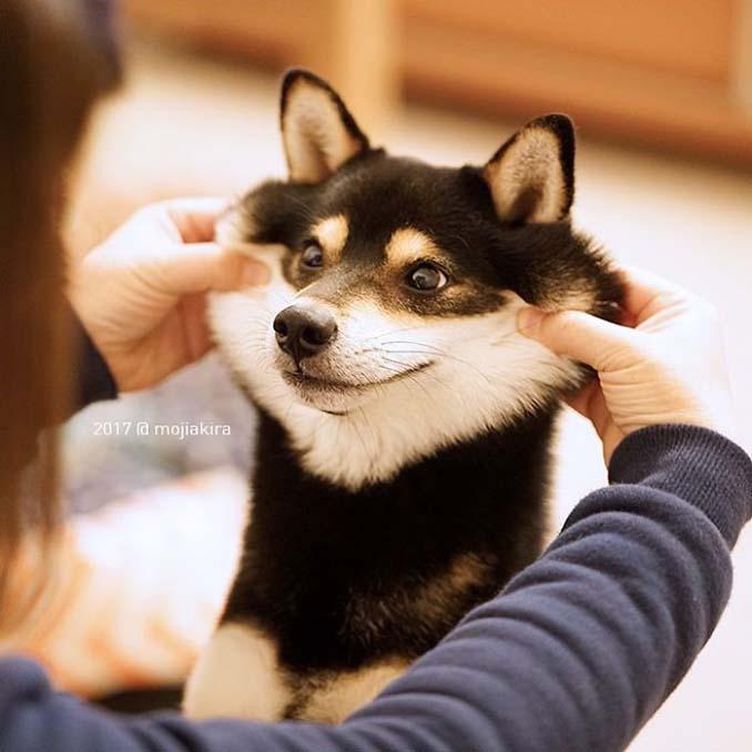 Σκύλοι με μάγουλα που είναι αδύνατον να μην ζουλήξεις (14)