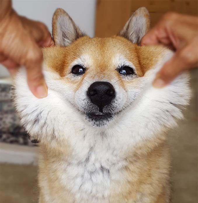 Σκύλοι με μάγουλα που είναι αδύνατον να μην ζουλήξεις (21)